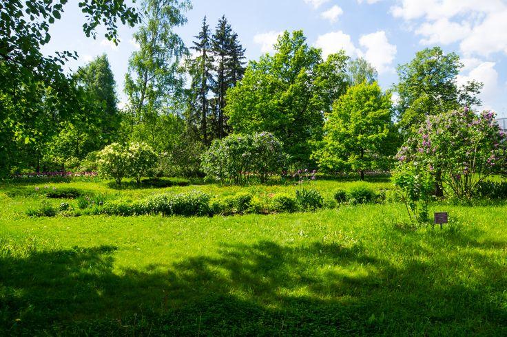 Фото парка Сокольники – фотографии в высоком разрешении бесплатно
