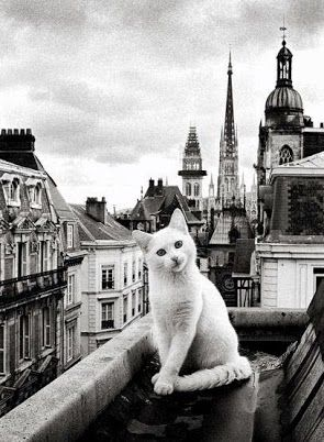 - Paris entre Chats