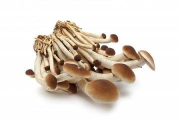 L' Agrocybe aegerita è un fungo commestibile noto anche con il nome di Piopparello o Pioppino. Cresce sui tronchi di vari alberi, tra cui il Pioppo.