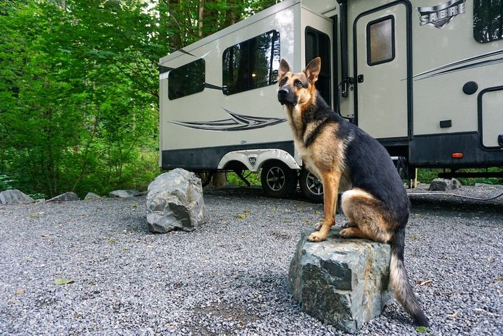 6 campers share their top tips for motorhome driving with dogs