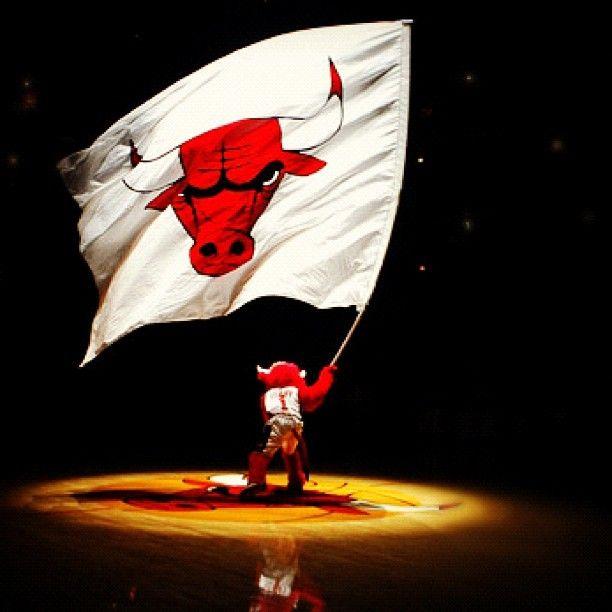 SB @sdb2092 #bulls #bullsnati...Instagram photo | Websta (Webstagram)