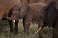 Dec 29, 2012: To Save Wildlife, and Tourism, Kenyans Take Up Arms - NYTimes.com