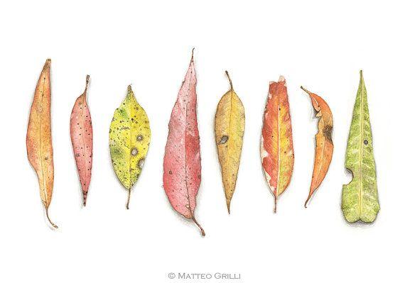 Eucalyptus Leaves, Watercolor Illustration, 11.8 x 16.5'' A3 Print, Wall Decoration, Botanical