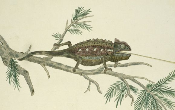 From the 'Gordon Atlas': Illustrations by Dutch explorer Robert Jacob Gordon of his travels in the Cape region, Africa