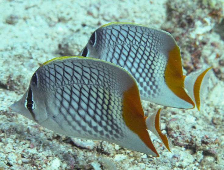 I love the #hatch #design on the sides of these #fish