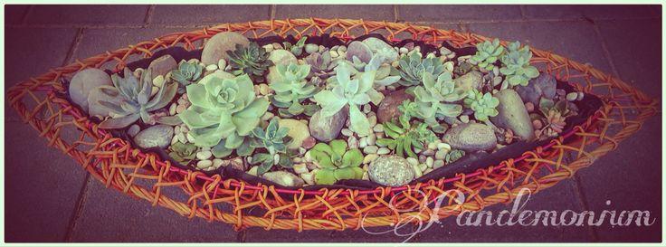 Succulent basket frame