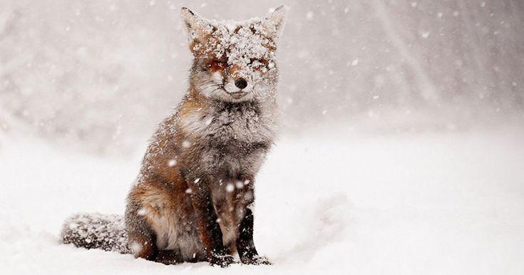Nel regno animale, le creature che vivono negli ambienti più freddi sanno come sopravvivere alle intemperie invernali, e queste fotografie lo dimostrano.