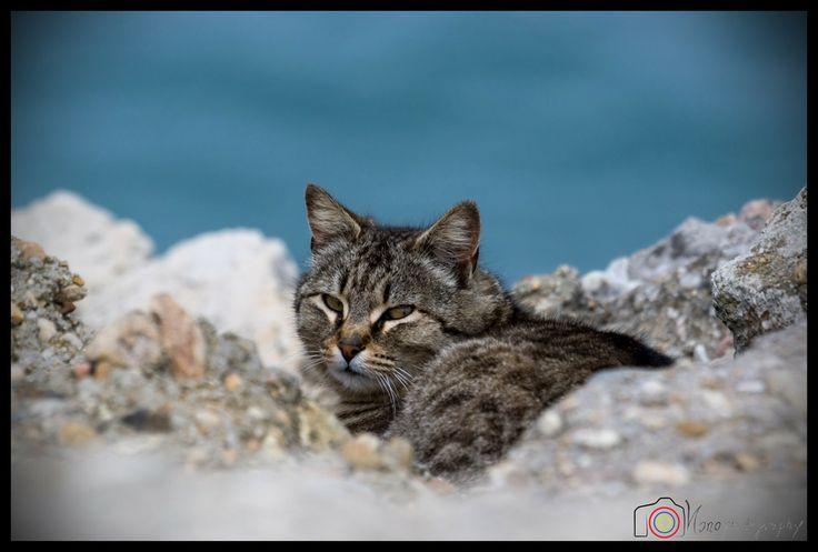 The cat ©Nono Pirvu by Nono Pirvu on 500px