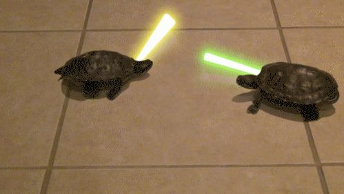 Or to battle turtles | 15 Gifs To Share With Your Friend That's Having A Rough Day