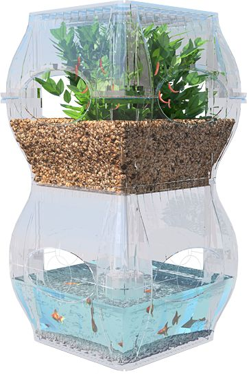 "The garden fish tank combines aquaculture and agriculture into a single integrated system. This new product uses a technique that has been dubbed ""aquaponics."""