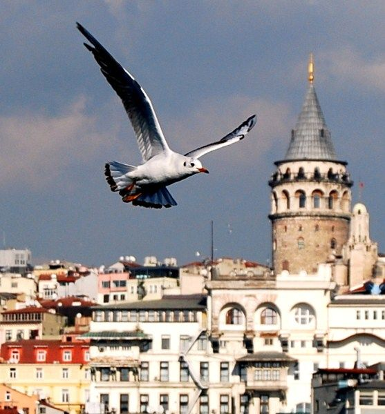 Skyline with Galata Kulesi (The Galata Tower) - Istanbul, Turkey