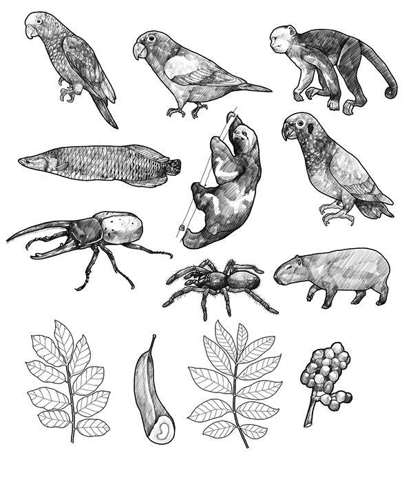 Estado de la biodiversidad en Colombia on Behance