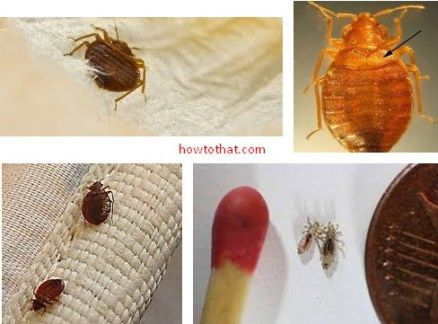 Can Bed Bugs Stay On Your Clothes All Day That You Re Wearing Life