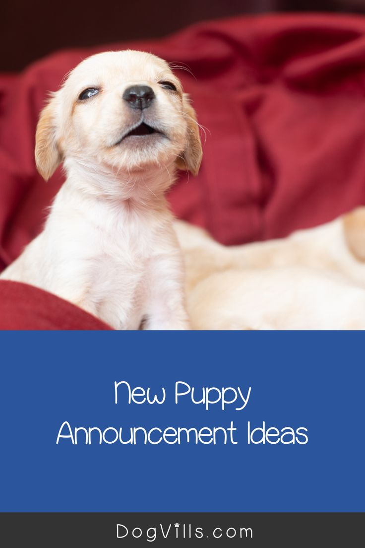 10 adorable new puppy announcement ideas puppy