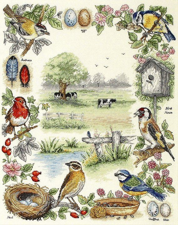 Counted Cross Stitch Kit Anchor PSC52 Birds Sampler