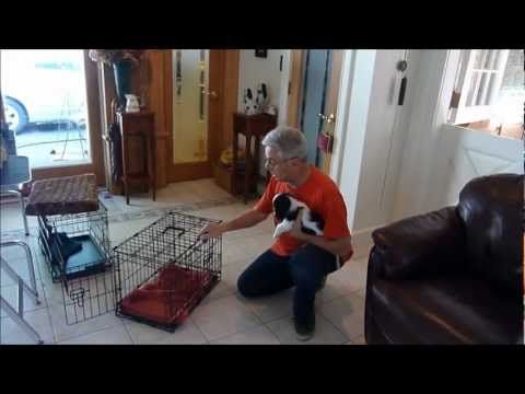 How to Housebreak a Puppy:  Crate Training