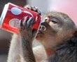 drink a coca cola! ;p Hell ya!:D: Monkey Buffet