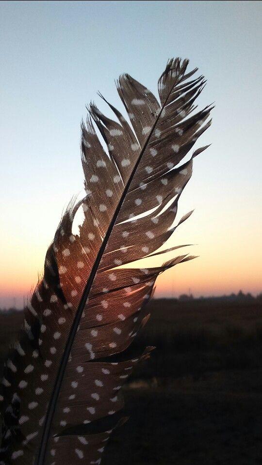 Sunsets #suset #sundown #feelfree #flyaway #feather #tarentaal #photographylove #photooftheday