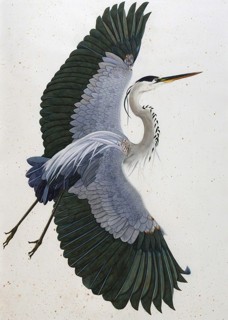 Scott Kelley, 'Heron, East'