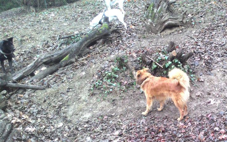 17/02/2016 - Torino con Peja, Moma e Leo