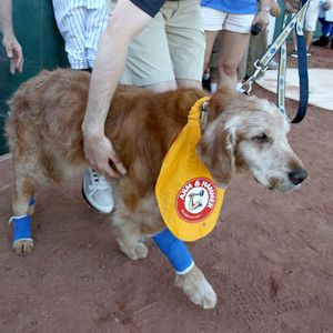 Sidelined by cancer, Chase the bat dog's send-off is a home run