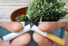 Végleg letettem a cigit! Ez a gyógynövény segített!