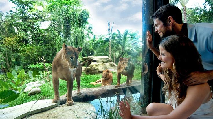Bali Zoo - Kebun Binatang Bali at Singapadu, Sukawati