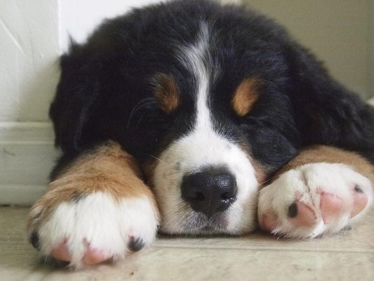 Sleeping puppies are good puppies