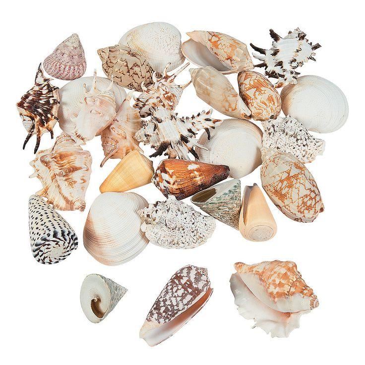 Mega+Sea+Shell+Assortment+-+OrientalTrading.com $14.99 5 lbs http://www.orientaltrading.com/mega-sea-shell-assortment-a2-13727279.fltr