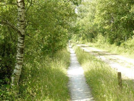 Foto: Gemengde bossen, Drenthe