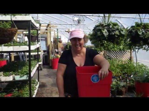 Capsule hebdomadaire 6 des Serres Li-Ma: Les pots - YouTube
