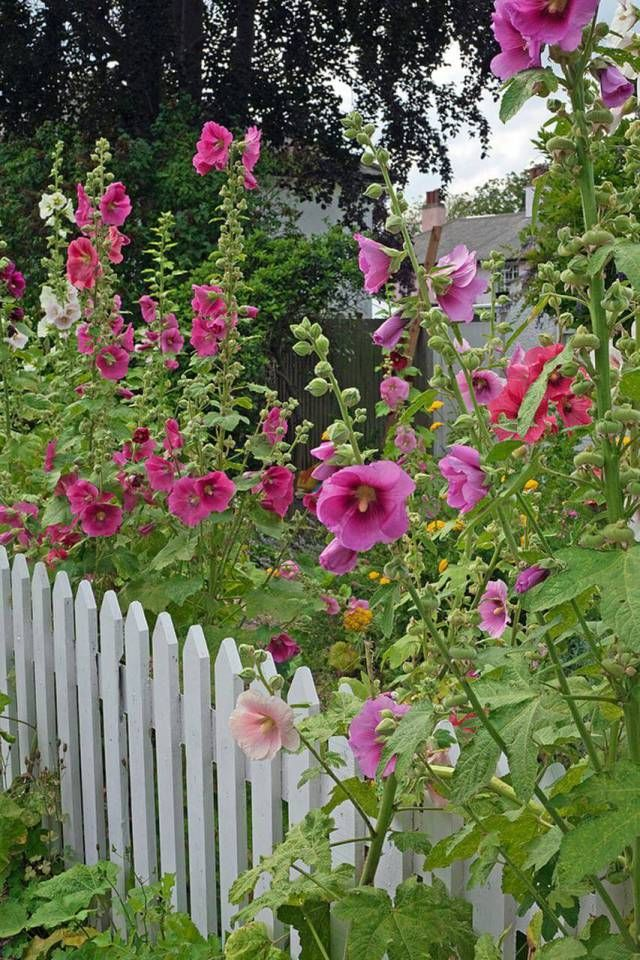 30 Simple But Beautiful Tall Cottage Garden Flowers Flower Garden Beautiful Gardens Cottage Garden