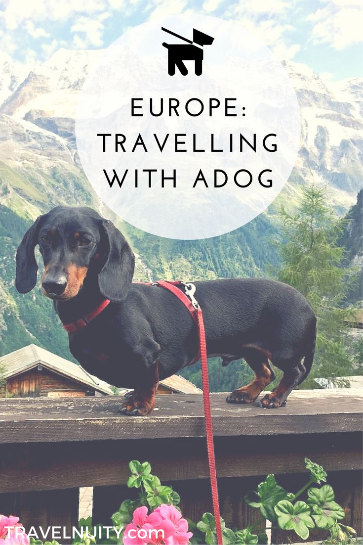 Your ultimate guide to travelling in Europe, the most dog-friendly part of the world, with a dog. Find out about rules for entry and travelling between countries, the best transport options, dining out, dog-friendly accommodation and what to see. #dogtravel #dogfriendlyeurope