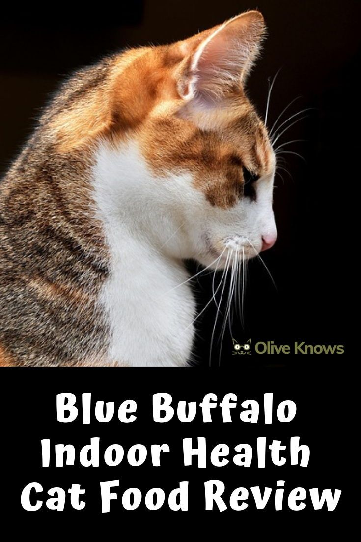 Blue Buffalo Indoor Health Cat Food Review With Images Cat Food Reviews Cat Food Cat Nutrition