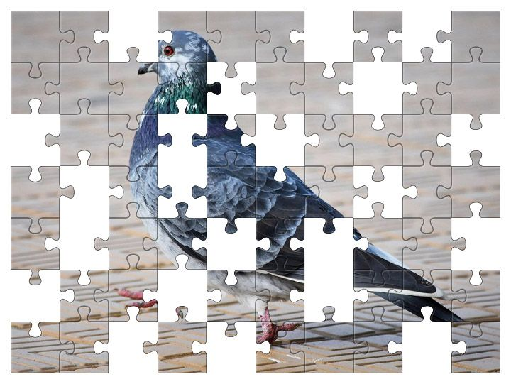 Free Jigsaw Puzzle Online - Pigeon