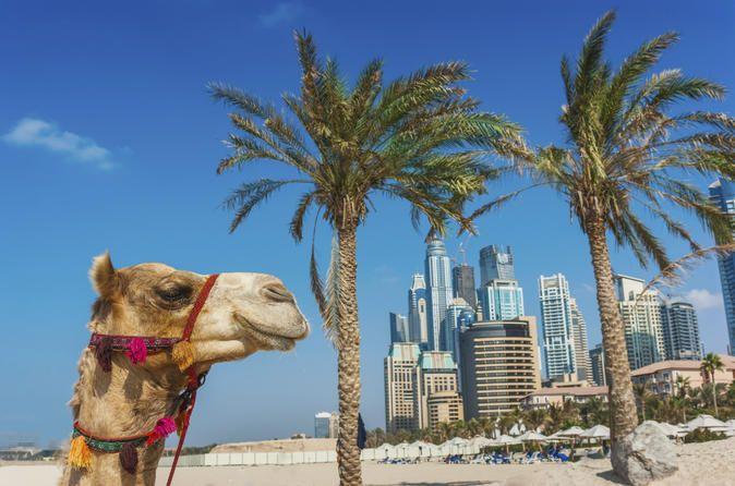Dubai Super Saver: City Sightseeing Tour and Desert Safari