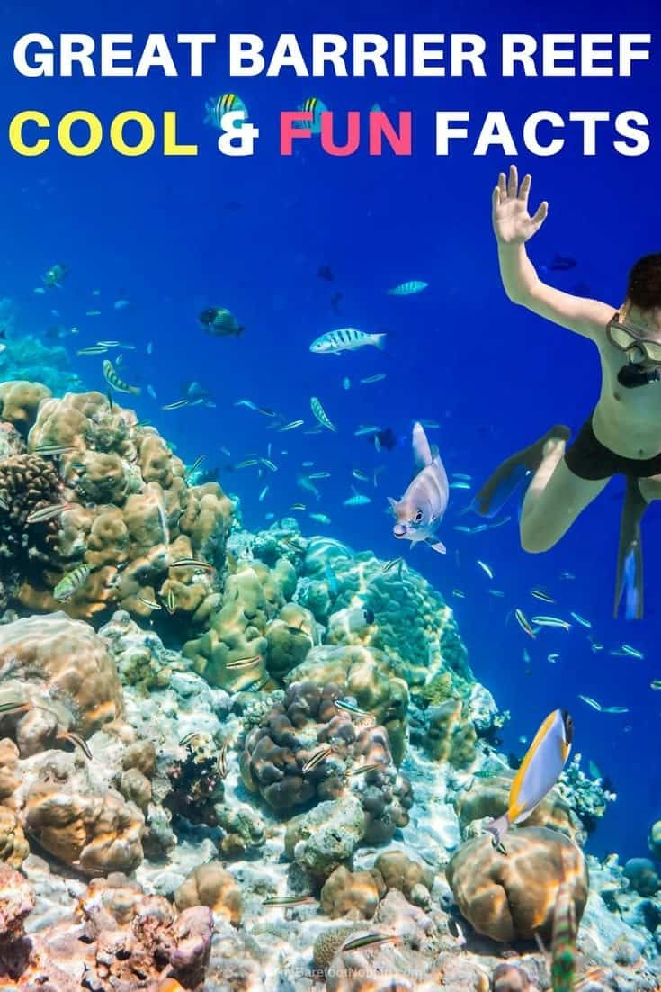 Fun And Interesting Facts About The Great Barrier Reef In Australia In 2020 Great Barrier Reef Australia Travel Guide Beach Vacation Travel