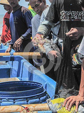 Yogyakarta, Indonesia. February 20th, 2010. A fisherman take fresh shrimps before give them to buyers.
