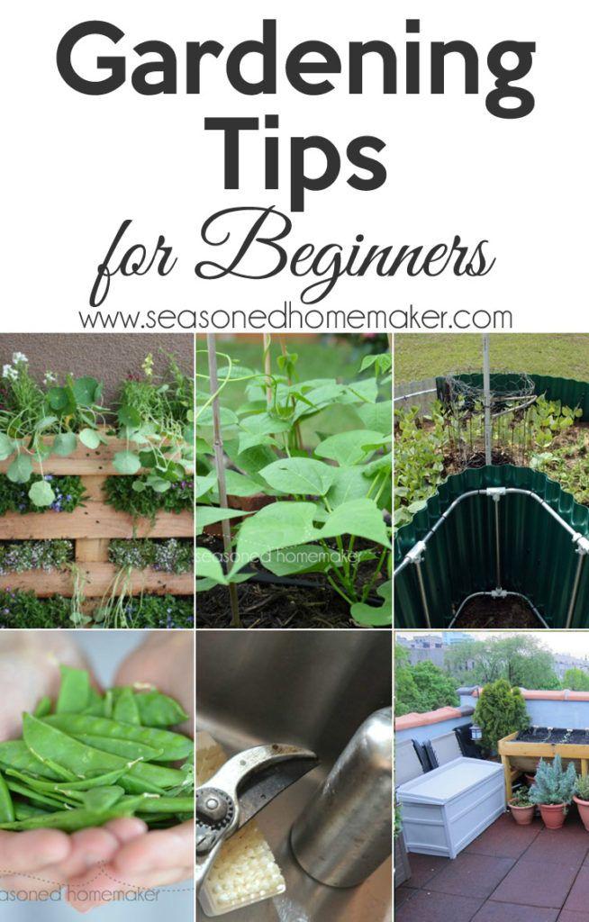 858 best gardening images on pinterest   gardening, fruit garden, Gartenarbeit ideen
