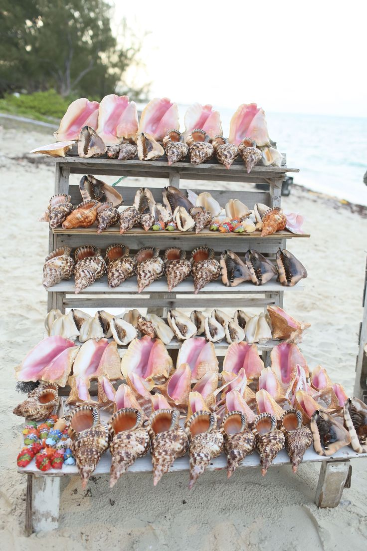 The 25+ best Conch shell for sale ideas on Pinterest | Shell pipe ...