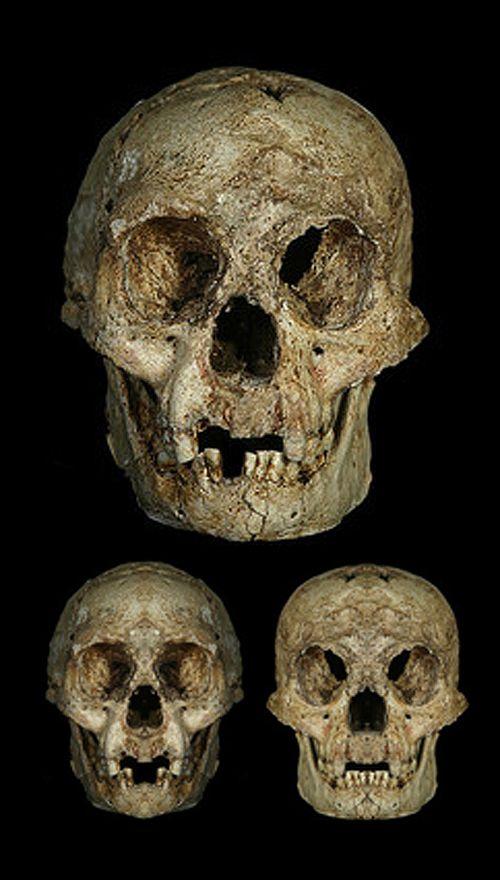 Homo floresiensis: Studie zweifelt an Hobbits als 'neue' Menschenart http://grenzwissenschaft-aktuell.blogspot.de/2014/08/homo-floresiensis-studie-zweifelt.html Abb.: A, E. Indriati; Image B and C; D.W. Frayer