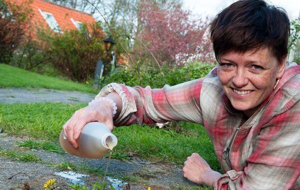 Eddike kan bruges til mange ting. Men kan det også bruges mod ukrudt, alger på terrassen og mos på fliser? Få svar her.