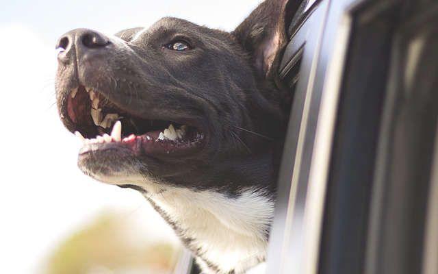 10 trucs pour en finir avec la mauvaise haleine chez le chien