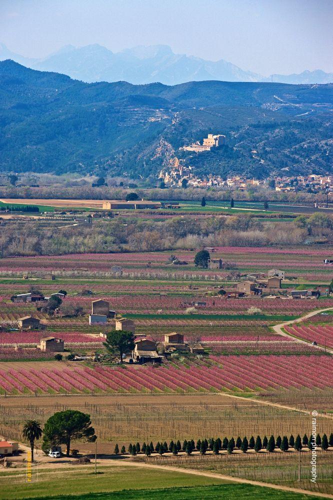 Ribera d'Ebre con el castillo de Miravet al fondo