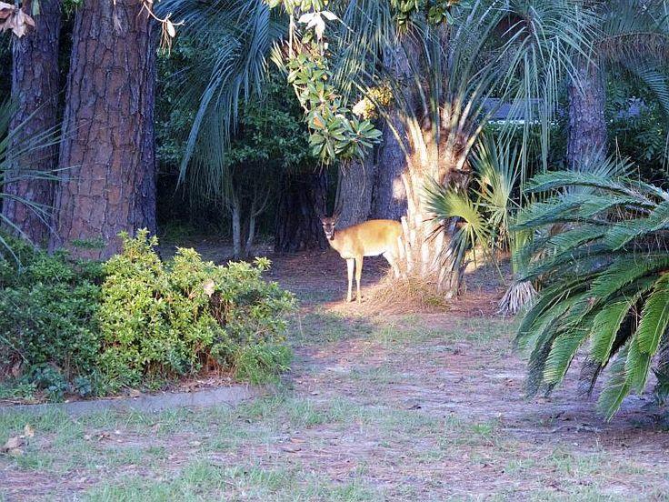 Wildlife Viewing Hot Spots on Jekyll Island