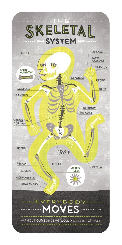 The Skeletal System by Rachel Ignotofsky. $23.00, via Etsy.