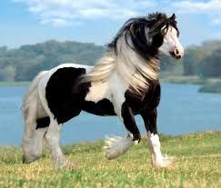 Mustang.... I love this breed & every wild thing about them!
