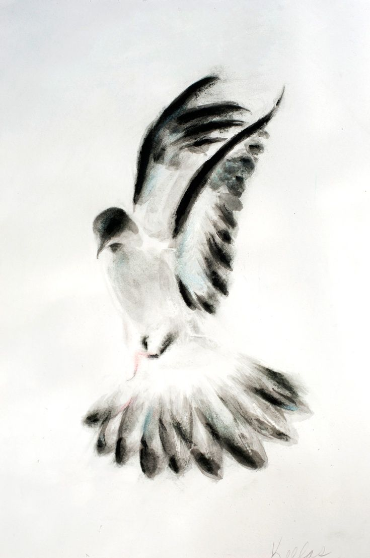 ARTFINDER: Dove 2 by Kellas Campbell - I used ink ground from an ink stick and mixed with water to paint this dove.  I smudged in compressed charcoal and some pastel stick for colours.