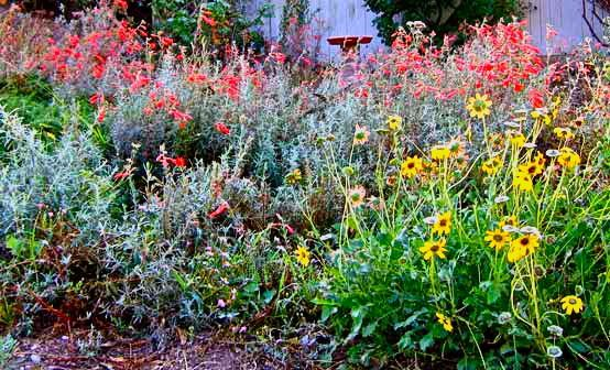1000 Images About California Native Garden Ideas On