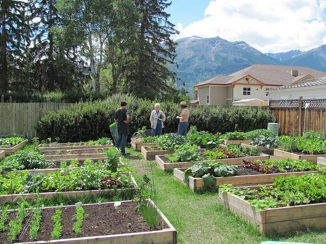 Original Community Garden by Jasper Municipal Library.